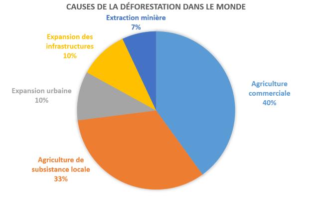 Les causes de la déforestation